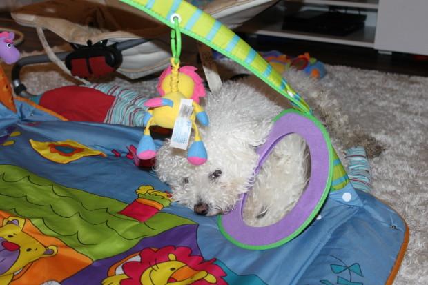 Nuusku väsähti leikkimatolle