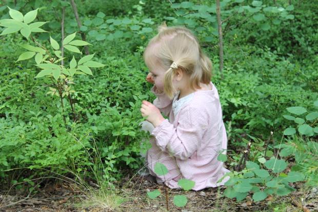 Amalia löysikin hyvän piilopaikan mustikoiden joukosta